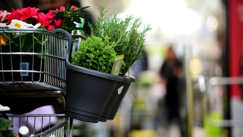 In Gartenmärkten kann gut Abstand halten und notfalls auch ohne Beratung gut einkaufen. Ihre Wiedereröffnung ist überfällig.