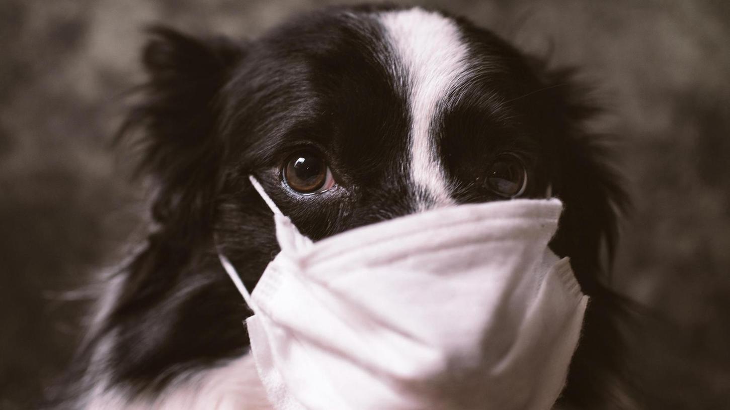 Das Tierheim Forchheim freut sich in Zeiten der Corona-Panedmie nicht nur auf Futterspenden, sondern auch auf altes Bettzeug, Decken oder Handtücher.