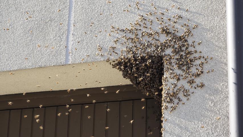 Das große Summen: Bienenschwarm fliegt mitten durch Nürnberg