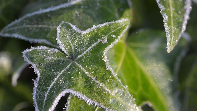 Statt Ärger mit den Nachbarn: Auf diese Pflanzen sollten Sie im Garten verzichten