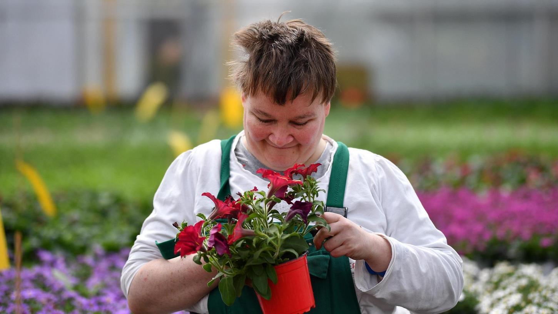 Das geht derzeit gar nicht: Ein Mitarbeiter in der Gärtnerei von Noris-Inklusion am Marienberg mit einem Topf Blumen. Da die Werkstatt-Mitarbeiter derzeit nicht arbeiten dürfen, muss hier eine Aufnahme aus dem Archiv als Ersatz dienen.