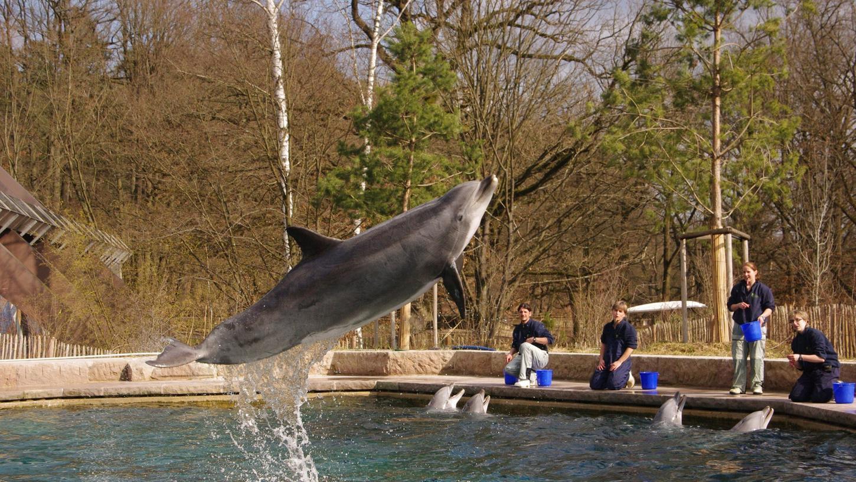 Delphinweibchen Anke in der Delphinlagune im Tiergarten Nürnberg. Die Aufnahme stammt vom März 2012.