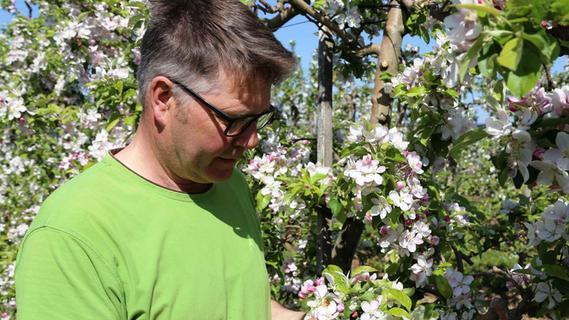 Weingarts: Äpfel auf sechs Hektar Fläche