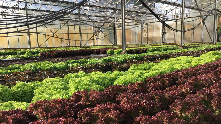 Zu Besuch beim Gemüsebau Sippel im Knoblauchsland