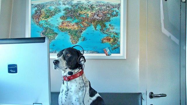 Hunde im Homeoffice! Die Vierbeiner unserer User erobern das Büro