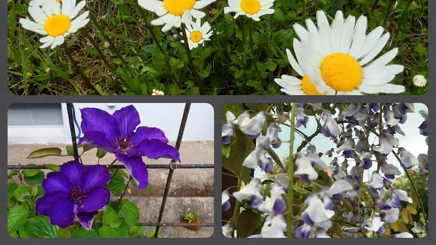 An der Blumenpracht in ihrem Garten in Gunzenhausen lässt uns Familie grießl auf originelle Art udn Weise teilhaben.