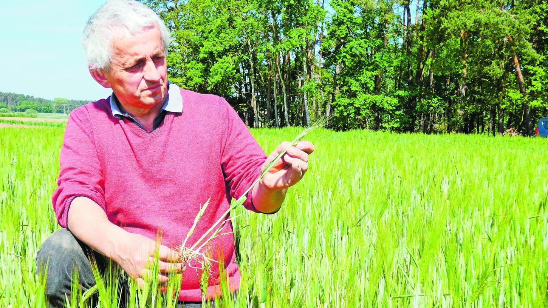 So eine lumpige Wintergerste ist Peter Köninger in seiner Laufbahn als Landwirt noch nicht untergekommen. Die Niederschläge von vergangener Woche ändern daran auch nicht mehr viel.