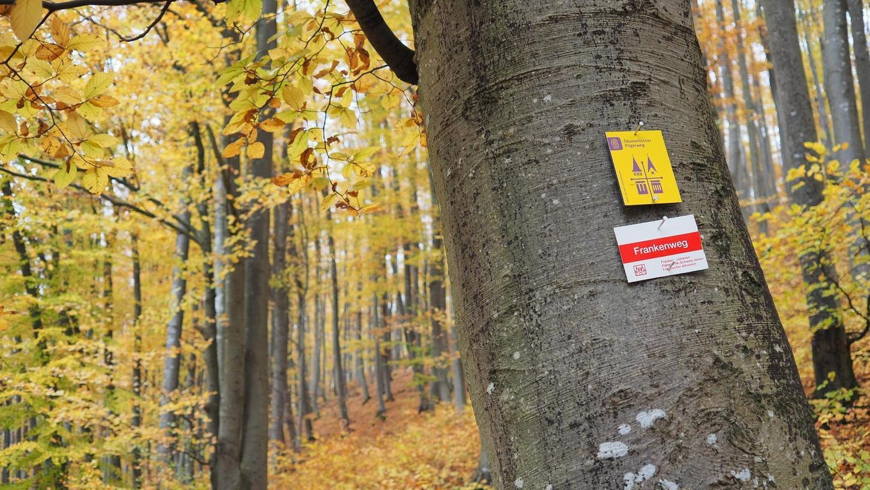 Herbstliches Farbenspiel am Treuchtlinger Nagelberg: Ein Kurwald könnte hier den Gesundheitstourismus in der Altmühlstadt voranbringen und auch ein Angebot für die Patienten der geplanten psychosomatischen Fachklinik sein.