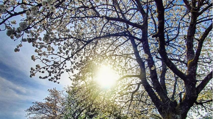So schön zeigt sich der Frühling im Kreis Forchheim
