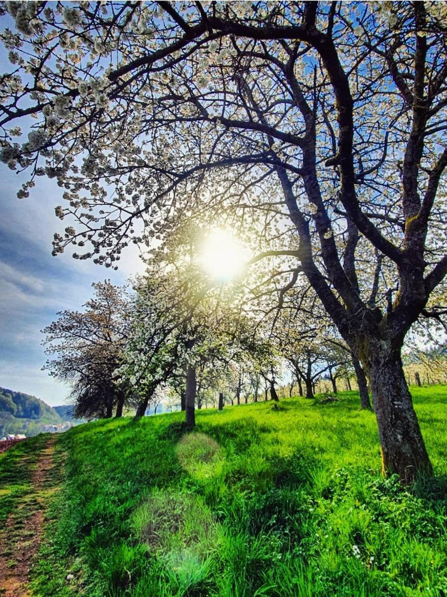 Motiv: Leserfoto von Instagram für Bilderseite; Weißenohe, Weissenohe, auf dem Weg zur Lillachquelle. Wandern; Baum, Bäume, Blüten; Frühling; Landkreis Forchheim; Sommer; Natur; Landschaft; Fotografiert von Lisa Vogel,