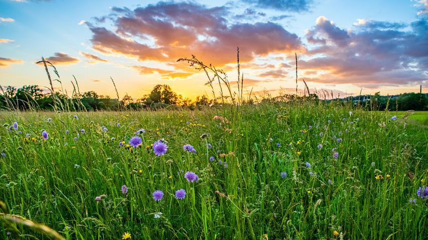 Frank Terassa hat die Felder zwischen Reuth und Gosberg nahe des Gosberger Wehrs am Schwedengraben im Sonnenuntergang wunderschön in Szene gesetzt. Zu seinem Instagram-Kanal geht es hier.