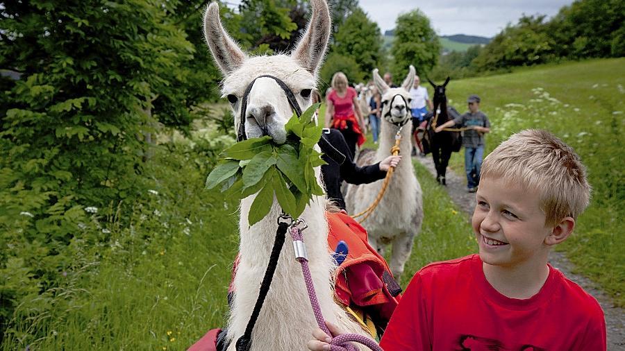 """Touristen wandern bei Poppenhausen mit Lamas durch die Rhön im bayerisch-hessischen Grenzgebiet. Der Wanderweg """"Hochrhöner"""" ist zum schönsten Weg in Deutschland gewählt worden."""