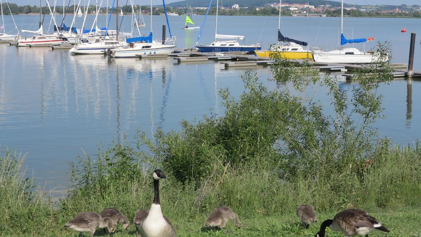 ...und für die watschelnden Bewohner des Ufers nahe des Seezentrums bietet das Wetter beste Bedingungen für einen Streifzug.