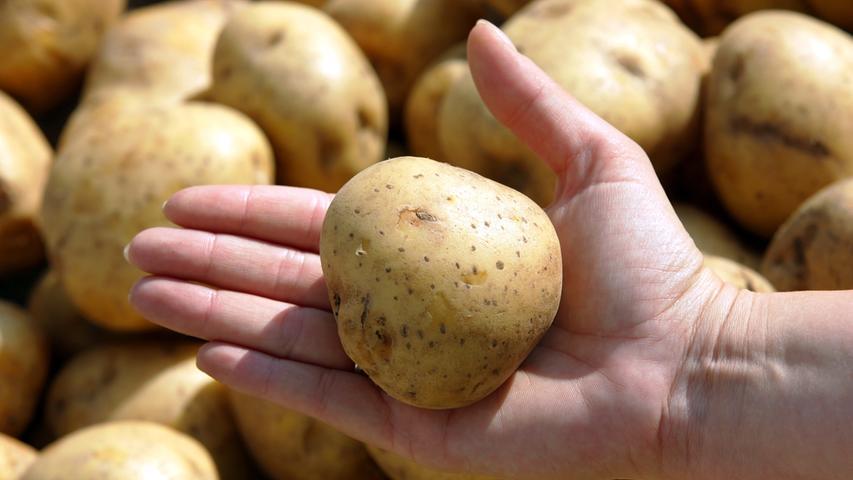 Kartoffelnsind reich an Kohlenhydraten, Eiweiß, Kalium, Magnesium und Eisen. Sie bestehen zu 80 Prozent aus Wasser und sind deshalb kalorienarm. Auch die Vitamine B1, B2 und C stecken reichlich in der Knolle. Pellkartoffeln enthalten mehr Kalium als beispielsweise gekochte Möhren oder Kürbis.