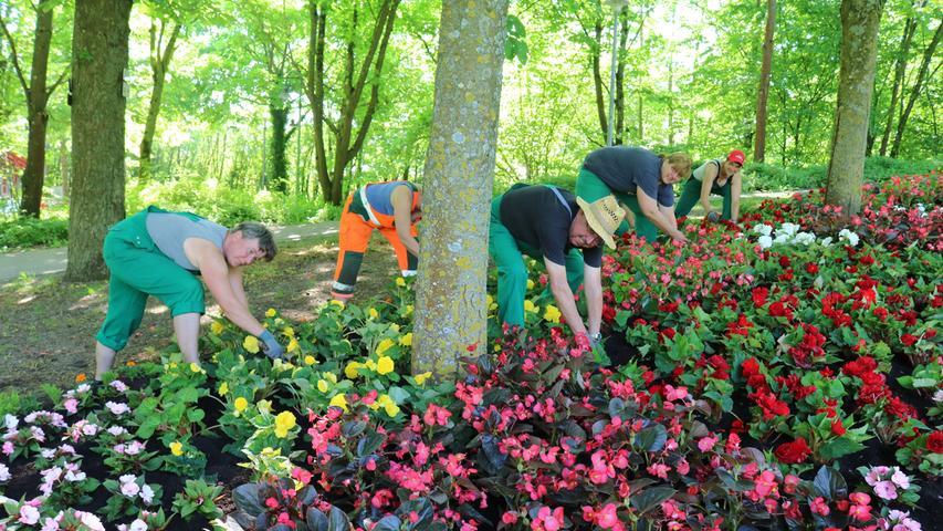 FOTO: Claudia Lehner, 2017 MOTIV: Bad Windsheim, Kurpark, Anpflanzen im Mai