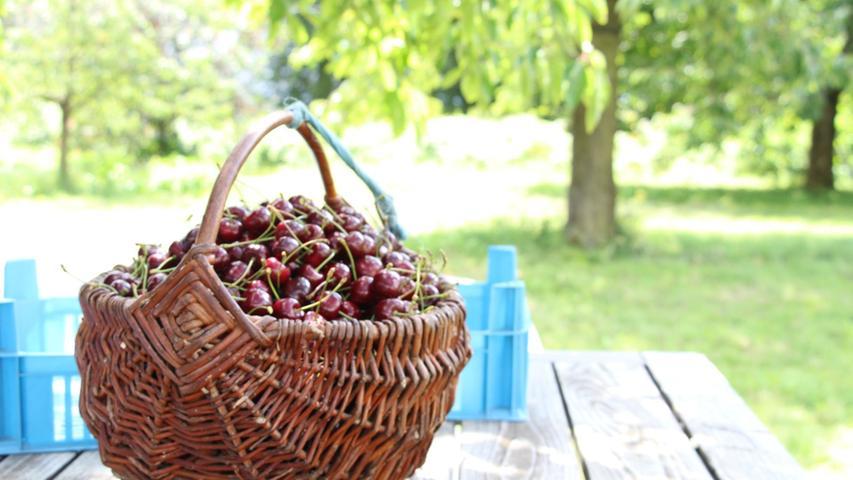 Die Kalchreuther Kirschen werden zu vielen verschiedenen Produkten verarbeitet, auch zu Kirschmarmelade oder Gelee.