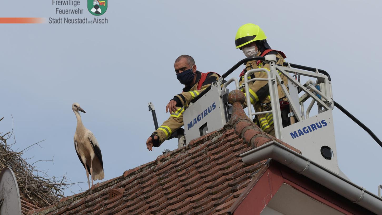 Der Biologe und ein Mitglied der Feuerwehr Neustadt/Aisch versuchen sich langsam dem Jungstorch anzunähern, um diesen zu befreien. Am Ende schaffte es das Tier von selbst.