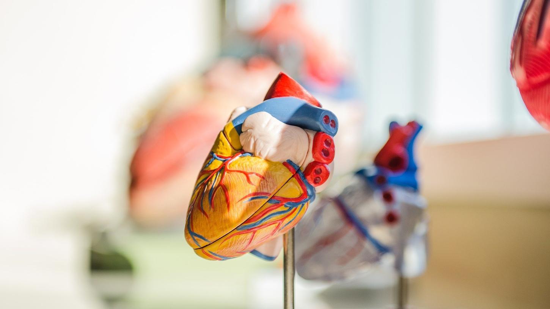Leidet das Herz nach einer Corona-Infektion weiter?