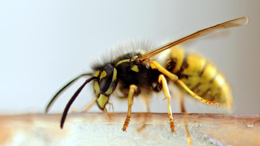 LBV erklärt: So sollten Sie im Hochsommer mit Wespen umgehen