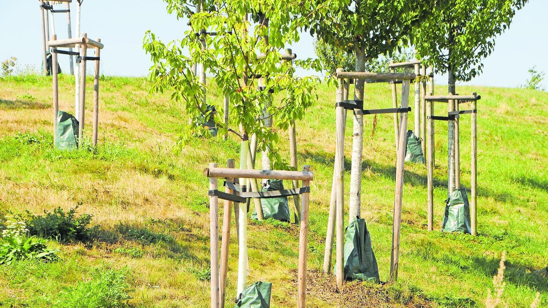 Am Lärmschutz der Herzo Base zur Nordumgehung stehen Bewässerungsbeutel fast an jedem Baum.