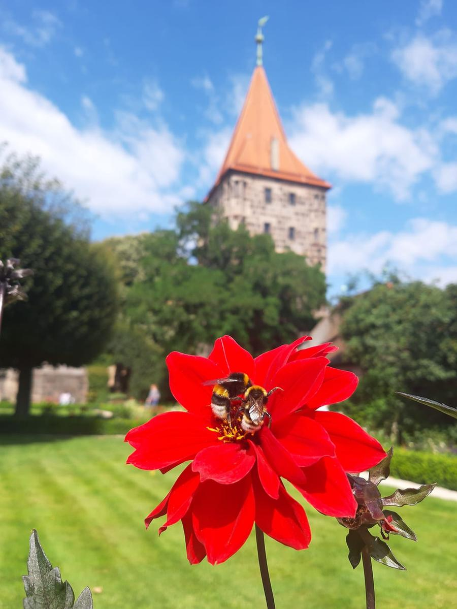 Der Burggarten lädt nicht nur die Menschen zum Verweilen ein, sondern auch den ein oder anderen Brummer.