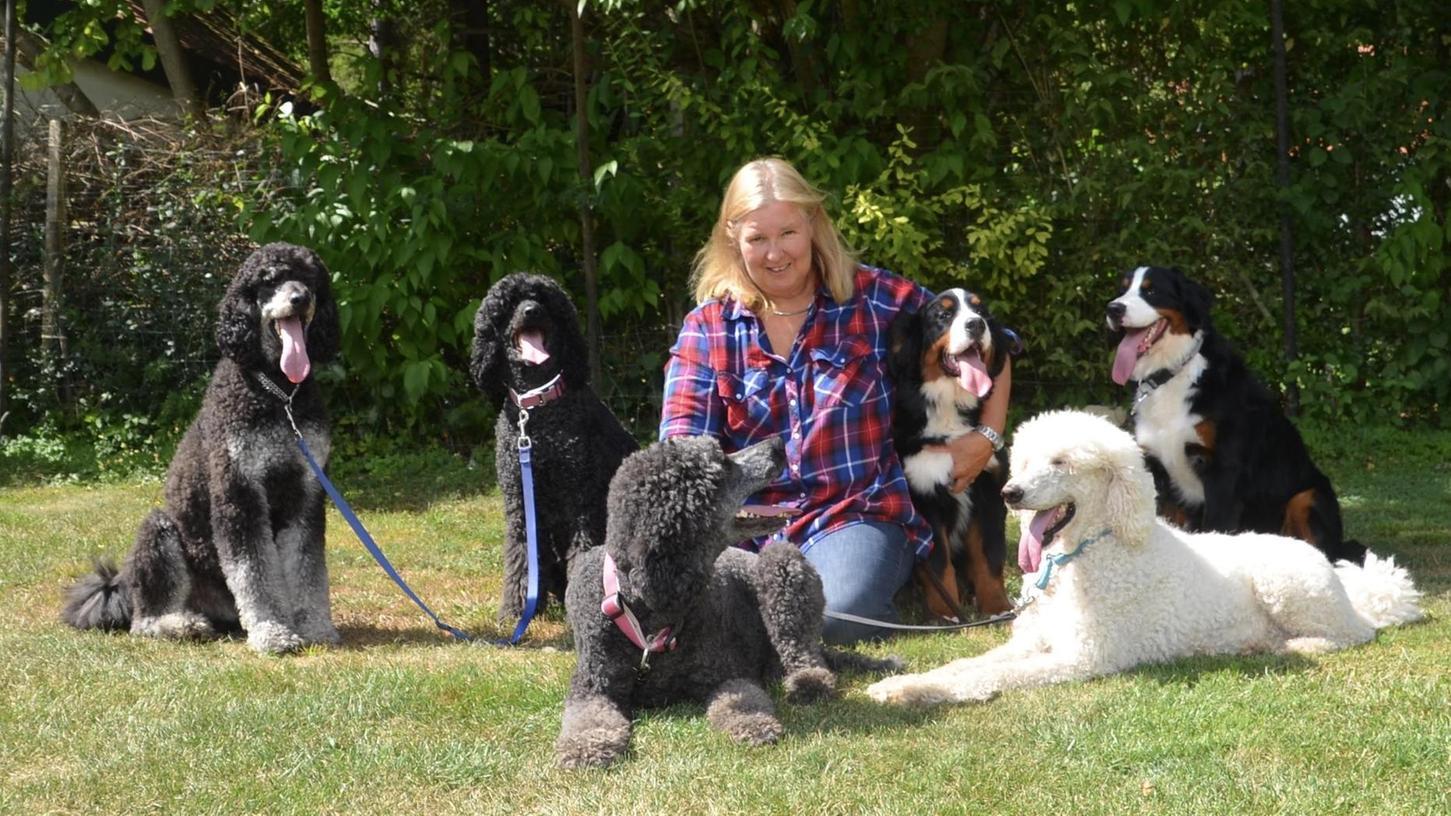 Hundezüchterin Birgit Beck mit den Großpudeln und mit zwei Berner Sennen (rechts neben ihr). Diese sind noch ganz jung und werden vielleicht mal in Zukunft zur Zucht eingesetzt. Dazu müssen sie erstmal die Gesundheitstests bestehen.