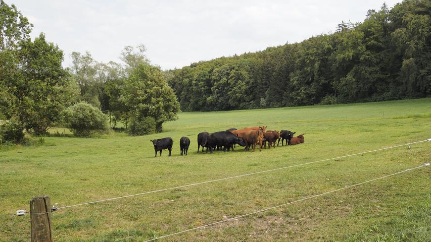 Außerhalb des Dorfes trifft man auf Gänse und Rinder.