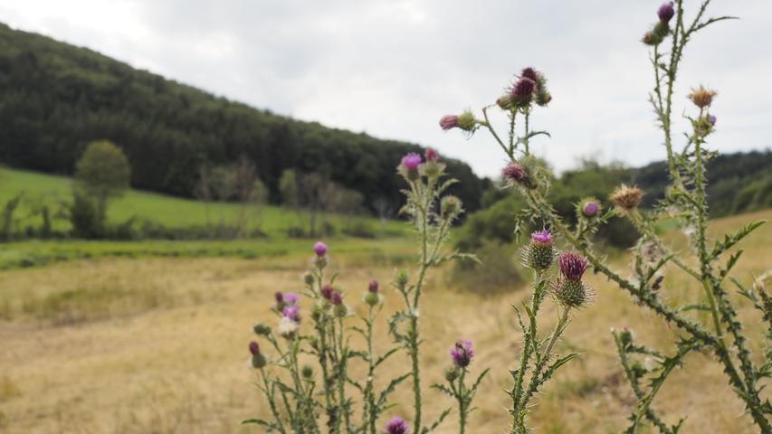 Während die Felder um die Rohrach eher karg und trocken sind...