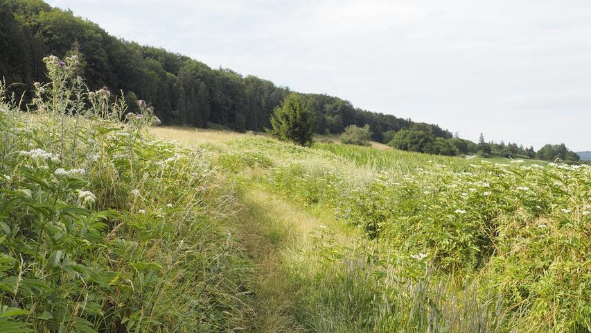Bis nach Wettelsheim geht es auf schmalen Pfaden am Rand von Feldern entlang.