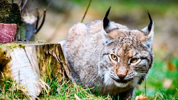 Wildes Franken: Das sind die Tiergärten und Zoos in der Region