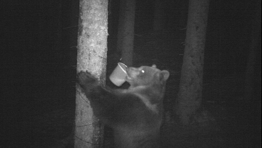 Wolf, Bär und Antilope: Seltene Tieraufnahmen von Wildkameras