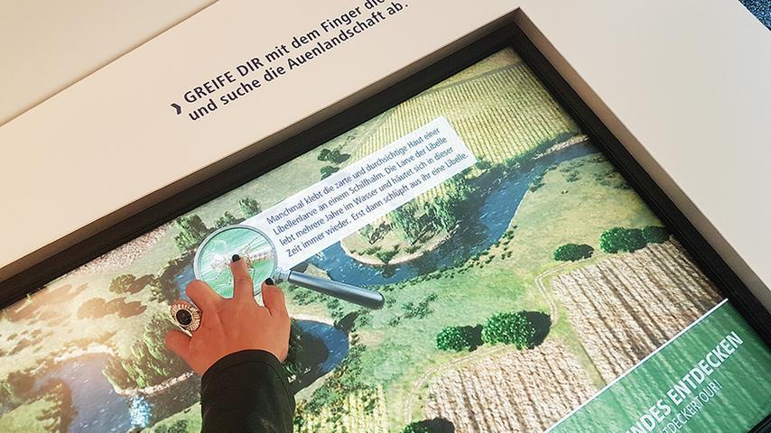 Im Fluvius wird einem der Lebensraum Wörnitz-Auen nähergebracht