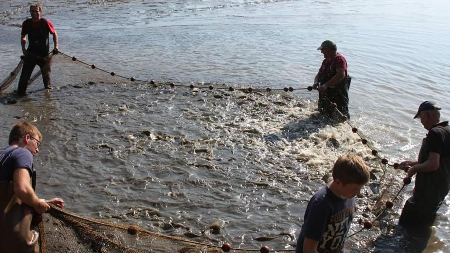 Auch am Rande des Aischgrunds – hier bei der Fischerei Oberle in Kosbach – lassen die Teichwirte bereits das Wasser aus den Teichen, um die Karpfen zu ernten. Der Vorsitzende der Teichgenossenschaft blickt optimistisch auf die Saison.
