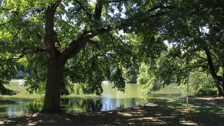 Nun lohnt sich ein kleiner Abstecher zum Fürther Stadtpark, wo nicht nur der große Stadtparkweiherumrundet werden will, ...