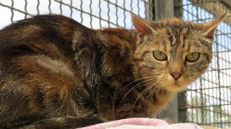 Hilla wurde in Windsbach gefunden. Der Finder ließ sie kastrieren und tätowieren, konnte sie aber nicht behalten, da Hilla nicht mit den hauseigenen Katzen zurecht kam. Sie wollte ihr neues Zuhause lieber für sich alleine haben, anstatt mit Artgenossen zu teilen. Hilla sucht nun einen Einzelplatz bei katzenerfahrenen Menschen, die geduldig mit ihr sind und ihr Zeit lassen, sich einzugewöhnen.