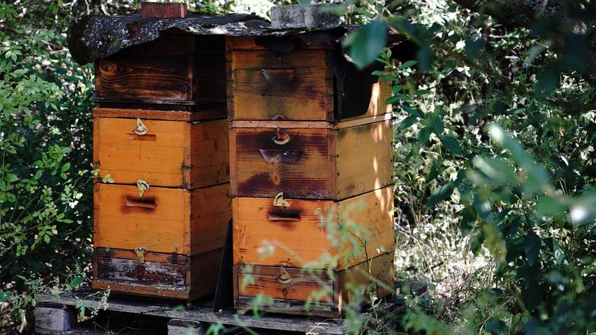 Auch Imker Thomas Hanika hat im Vereinsgarten sein Reich bei den Bienenstöcken. Der köstliche Honig ist ein Bestseller.