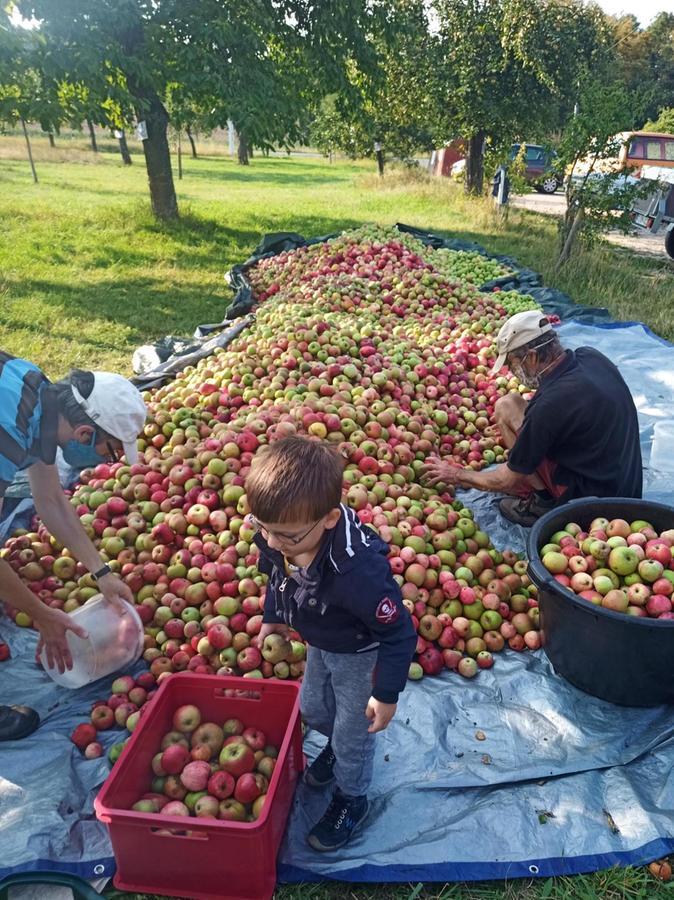 2020 ist eine gutes Apfeljahr. Die Ernte ist reichlich. Dementsprechend ist bei den Mostereien in Altmühlfranken viel los.