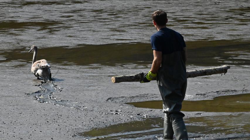 Schwan im Schlamm: Vogel sorgt für langen Rettungseinsatz