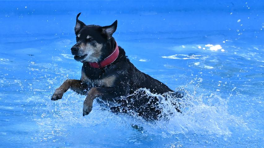 Zum Ende der Freibadsaison 2020 gehörte das Becken in Thalmässing den Hunden. Alle Bilder dazu gibt's hier!