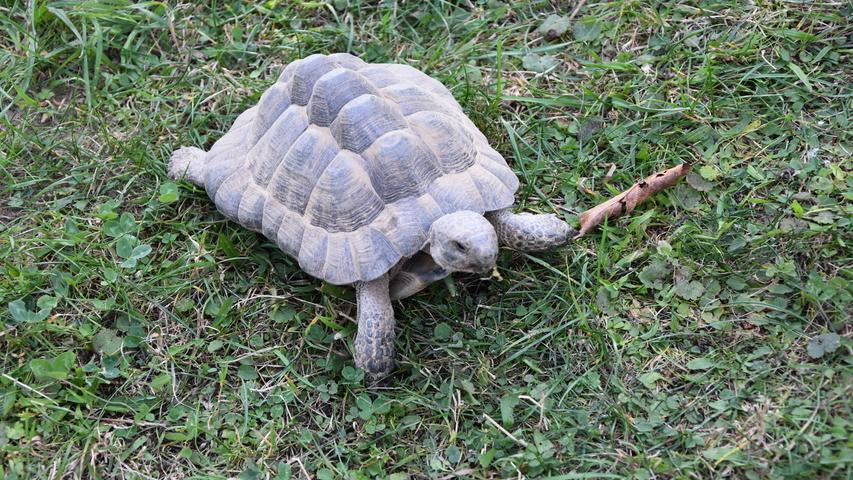 Hallo kleines Kerlchen! Schildkröten sind interessant, als Haustiere aber nicht für jeden geeignet.