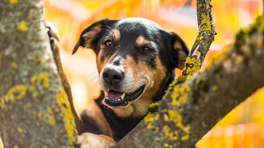 Von Dalmatiner bis Chihuahua: Die schönsten Hundebilder unserer User