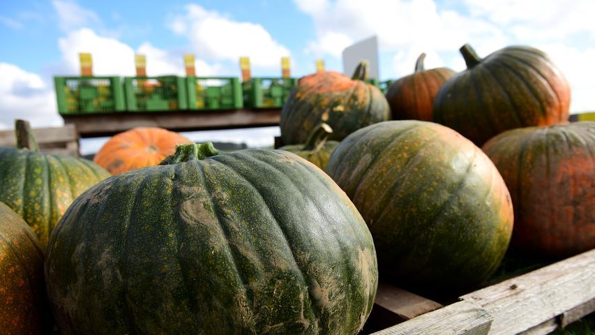 Gemüse aus dem Garten schmeckt bitter: Bei diesen Sorten drohen Vergiftungen