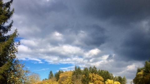 NN-Leserin Irene Renner hat das sonnige Wetter genutzt, um Herbstimpressionen in der Region einzufangen, hier die Laubfärbung bei Plech.