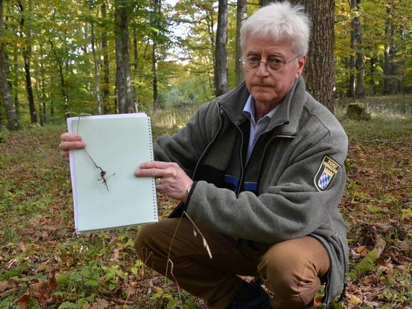 Eichen haben tief in die Erde reichende Pfahlwurzeln, wie Jürgen Stemmer hier an einem einjährigen Bäumchen demonstriert. Das macht sie besonders klimaresistent.