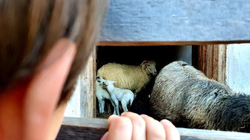 Auch Schafe werden hier gehalten.