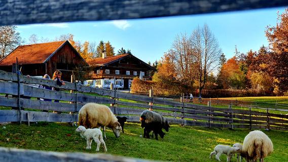 Schafsweide im Freilichtmuseum Glentleiten nahe Kochel am See. Hier stehen unzählige versetzte oberbayerische Bauernhöfe und Almen.