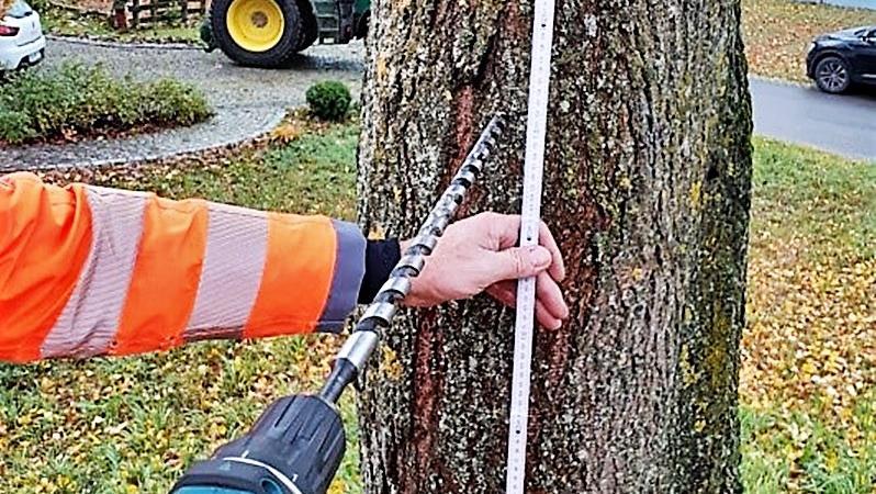 Probebohrungen an der Linde lieferten keine Gründe, den Baum zu fällen.