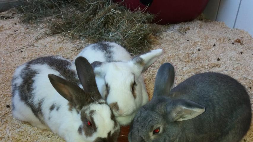 Tierheim Feucht: Diese Tiere suchen ein Zuhause
