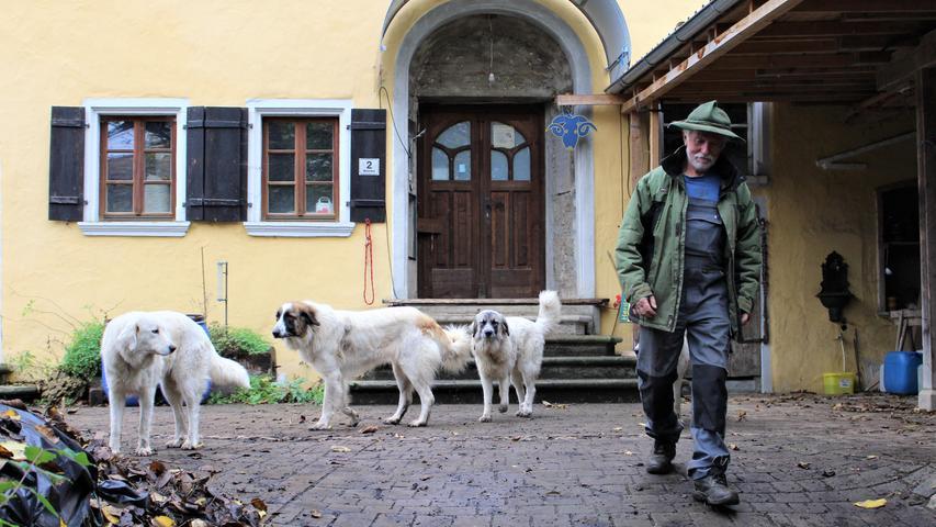 Um die Tiere zu beschützen, hat sichHofbesitzer Peter Dobrick, Pyrenäenberghunde angeschafft. Das sind Herdenschutzhunde.