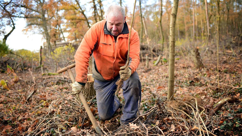 Mit einem Hohlspaten bereitet Udo Strauß, Mitarbeiter der Stadtförsterei, die Pflanzlöcher für die zweijährigen Setzlinge vor.